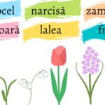 narcisă, ghiocel, lăcrămioare, lalea, zambilă, frezie